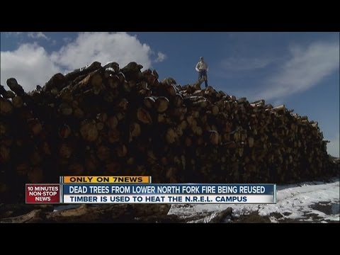 Dead trees from Lower North Fork Fire being reused
