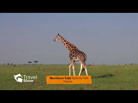 PAKUBA SAFARI LODGE-MURCHSION FALLS-NBS TRAVEL SHOW BISMAC