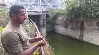 Fish hunting || Tilapia fishing