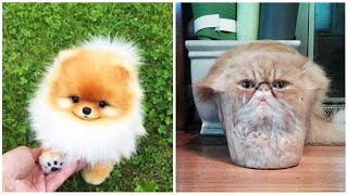 Dogs And  Cats In Funny Situations  Try Not To Laugh