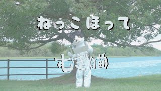 むぎ(猫) 『ねっこほって』 【ミュージックビデオ】