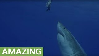 Check out this in-your-face footage of a Great White!