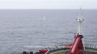 видео Южный океан
