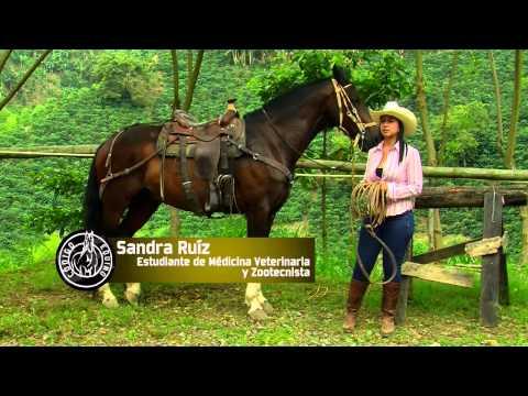 Historias de Mujeres y su vida en el mundo de los Caballos Parte 1 TvAgro por Juan Gonzalo Angel