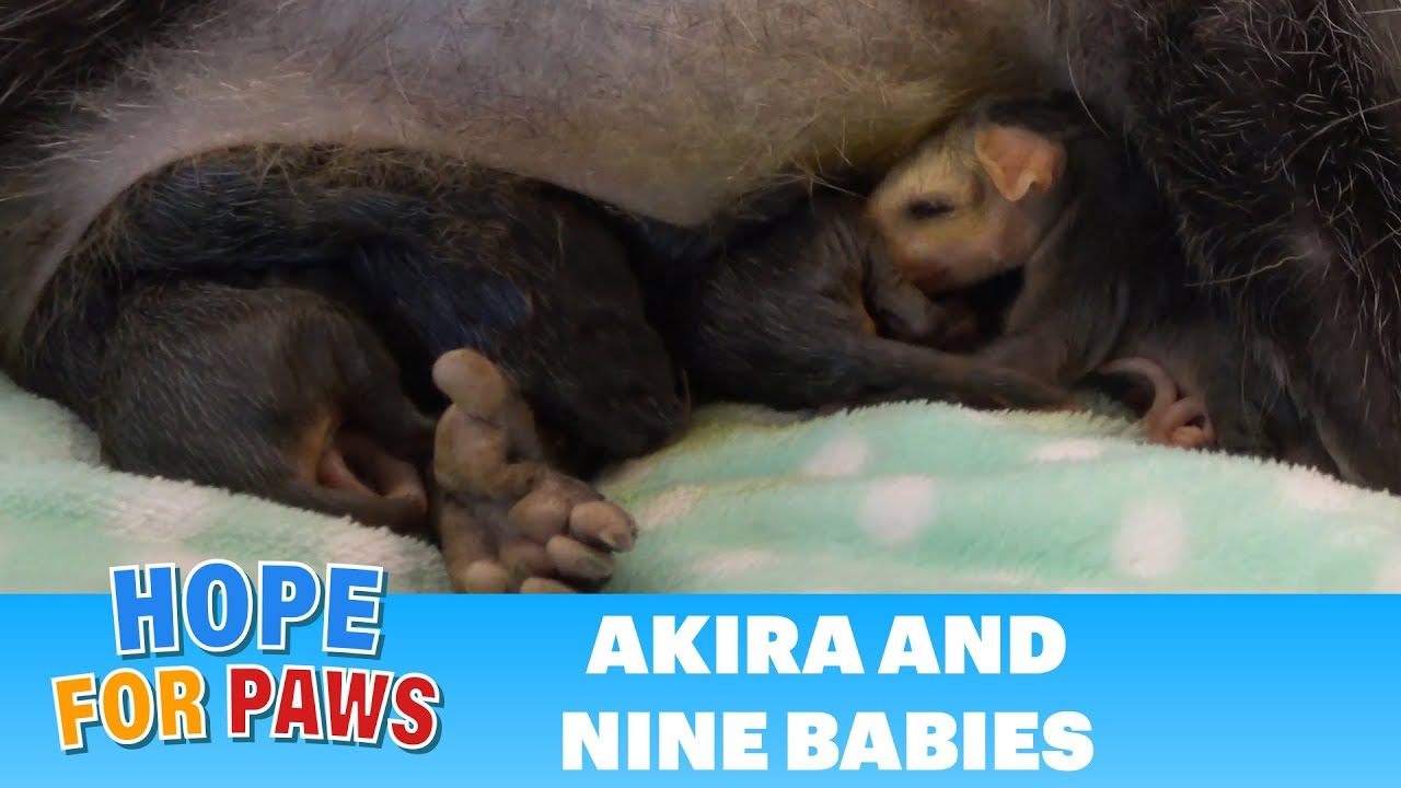 It's UNBELIEVABLE how this mom kept her babies alive!!! We would LOVE your  comments #HopeForPawssum