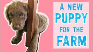 WE GOT A PUPPY! Can you guess her breed? #FarmhouseLife Ep 1