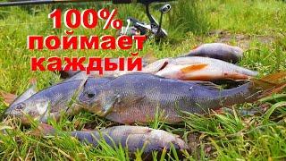 Лучшая оснастка для ловли окуня Ловля окуня на спиннинг Рыбалка на красивом озере