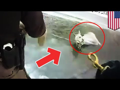 Animal rescue stories: Police, firefighters save horse from frozen pond in Michigan - TomoNews