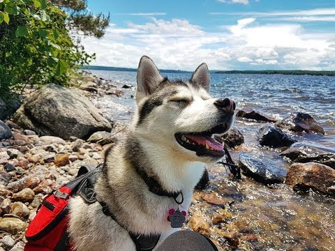 Hiking with a Husky at Georgian Island National Park