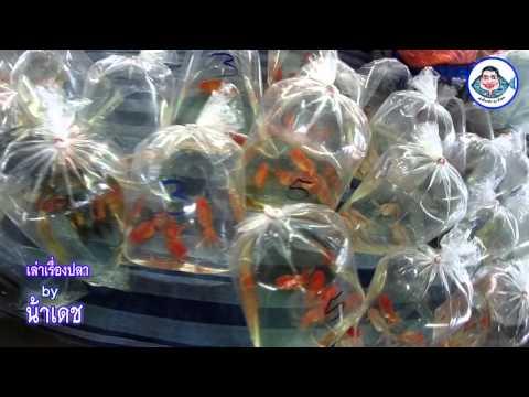 เที่ยวตลาดปลาลานเร่ JJmall