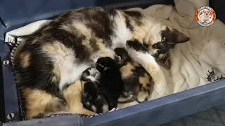 Rescue Poor Mom and Kittens was Abandoned on Street by a Heartless Woman from Her Cubs