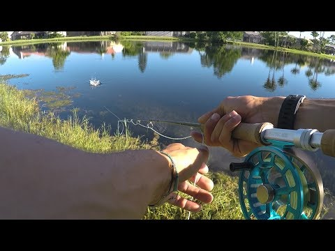Top Water Fly Fishing For Florida Bass