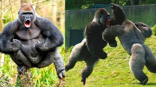Strongest Animals On Earth!