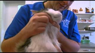 Wilson the cat gets a checkup with Vet Martha
