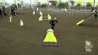 Carly Sat Novice Fast Staffordshire Bull Terrier Club Of America Akc Dec 2012