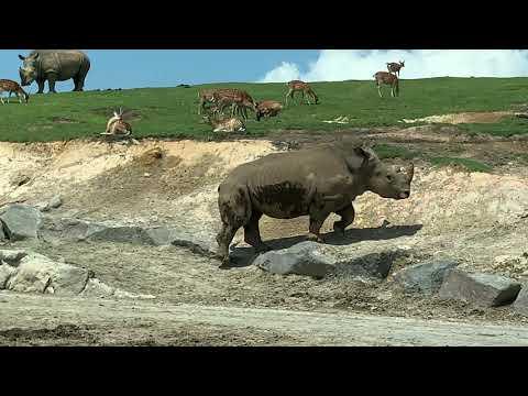 九州自然動物公園アフリカンサファリ - YouTube