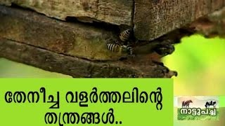 Bee keeping - Manorama News Nattupacha