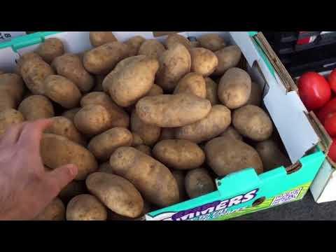Rochester Public Market Grocery Haul