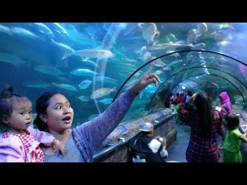 Reaksi Balita Lucu Melihat Bermacam Ikan Di SeaWorld Ancol Jakarta - Wisata Edukasi Bawah Laut