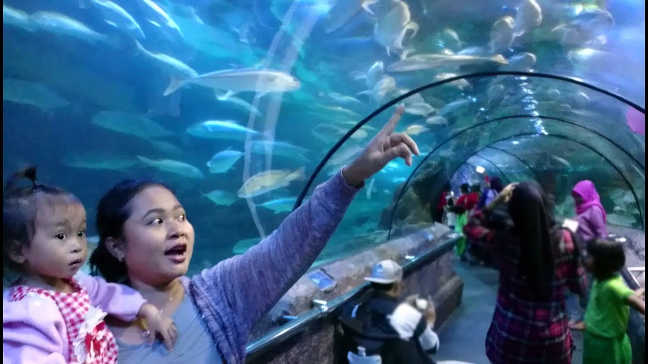 Reaksi Balita Lucu Melihat Bermacam Ikan Di Seaworld Ancol Jakarta Wisata Edukasi Bawah Laut
