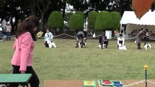 20141103 千葉西セントラル犬友クラブ展.