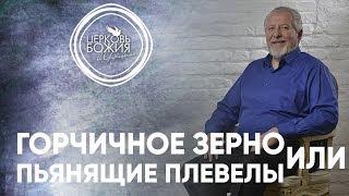 Горчичное зерно или пьянящие плевелы - 11 июня 2017 - Сергей Ряховский