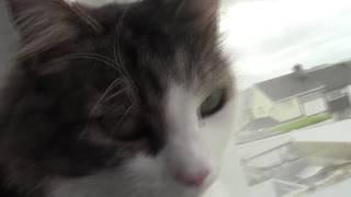 Merry (Haganistan Cat 14)