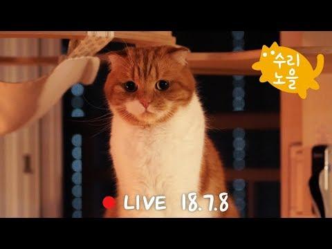 [생방송] 노을이 6살 생일파티 - 수리노을 고양이가족 2018년7월 8일 【SURI&NOEL】