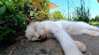 猫の休憩所、暑いんで昼間はグッタリみんな寝ています。
