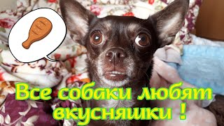 ВСЕ СОБАКИ ЛЮБЯТ ВКУСНЯШКИ/ALL DOG LOVE TREATS