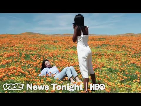 Instagrammers Are Killing This Field Of Poppies (HBO)