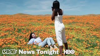 instagrammers-are-killing-this-field-of-poppies-hbo
