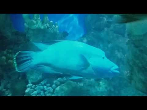 Fish Aquarium, Jeddah Saudi Arabia part-1
