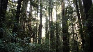 Recording Forest Air Ambiences with a Wildtronics SAAM near Redwoods National Park in California