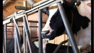видео Эко-ферма