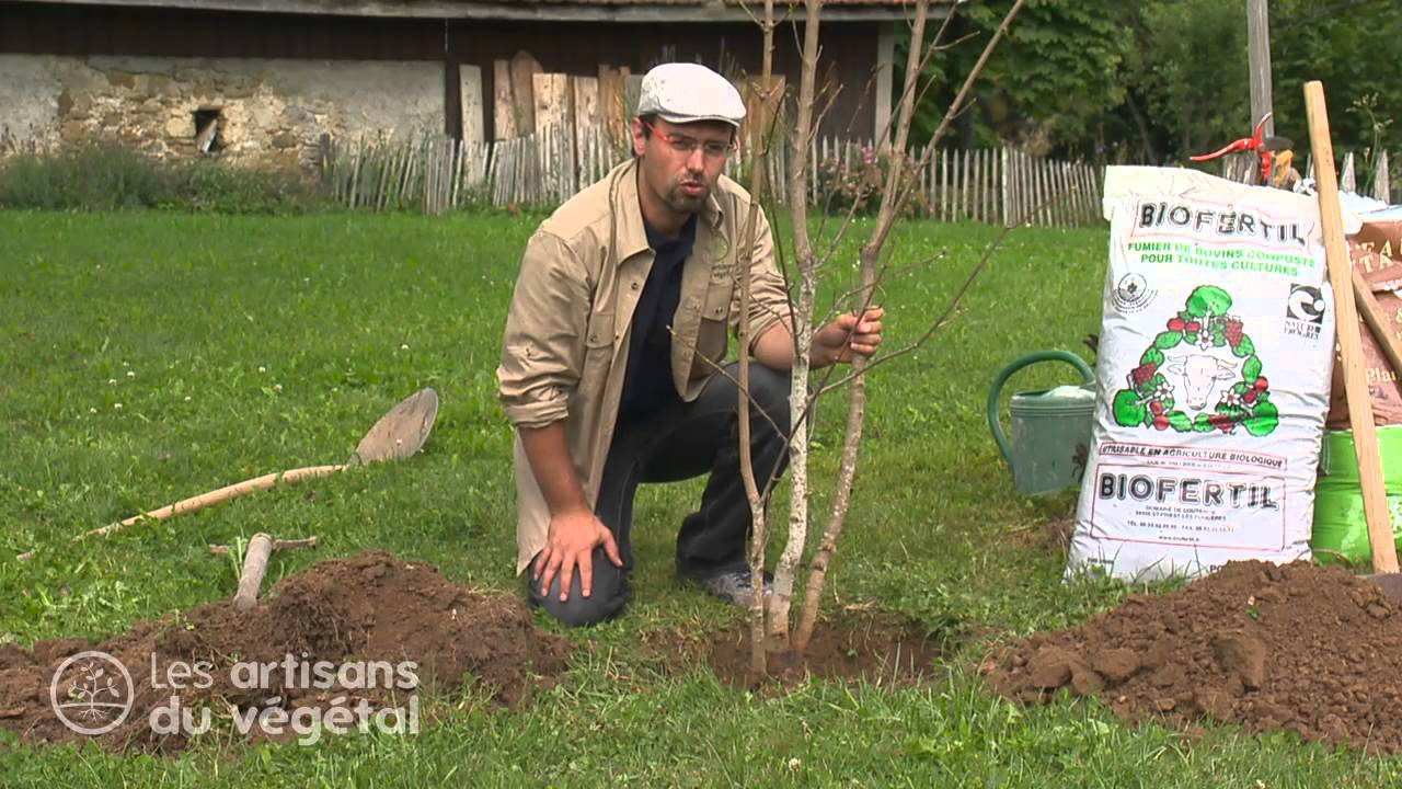 Comment planter un arbre en racine nue youtube - Planter un arbre fruitier ...