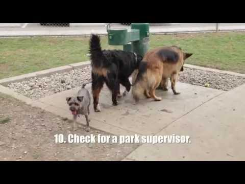 Watch This Video Before Going to a Dog Park