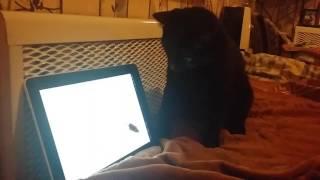 Кот планшет