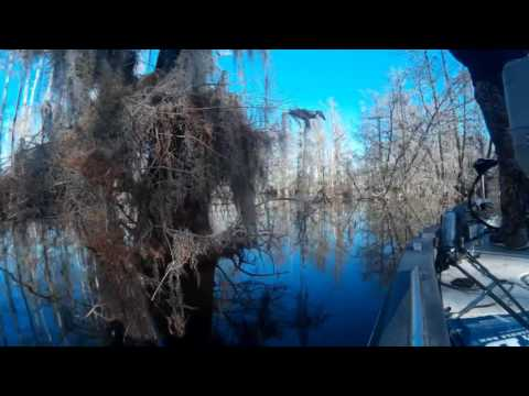 Topwater Action In The Swamp!! Bass fishin in Stumphole Swamp, Lake Marion. South Carolina