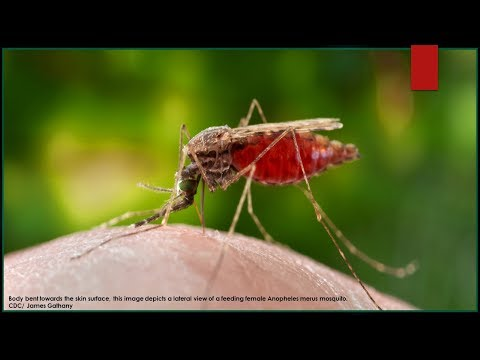RCOG Guideline The Prevention of Malaria in Pregnancy No. 54a