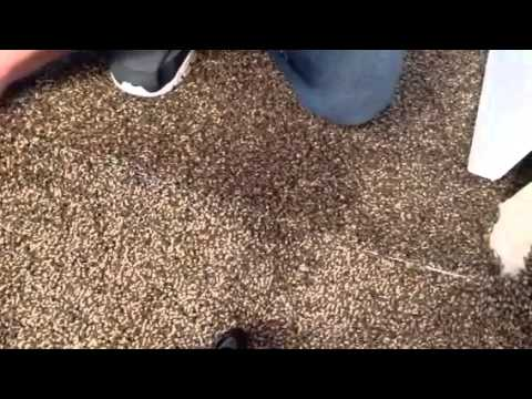 how to cut a carpet seam youtube. Black Bedroom Furniture Sets. Home Design Ideas