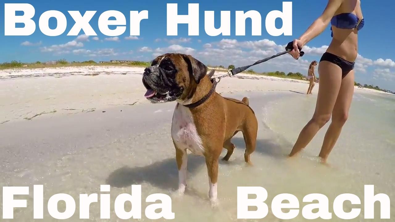 spass mit boxer hund am dog beach in florida youtube. Black Bedroom Furniture Sets. Home Design Ideas