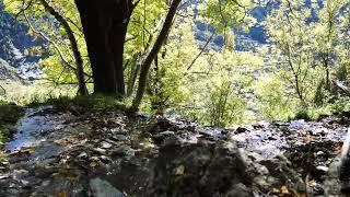 Harika Arp ve Flüt Rahatlatıcı Müzik Meditasyon ve Rahatlama için Sakinleştirici Kelt Müzik
