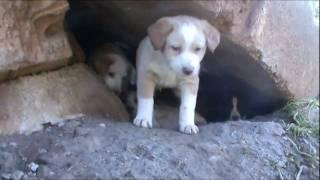 Madre y 4 cachorros