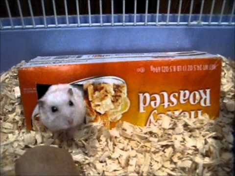 Make Homemade Hamster Toys 110