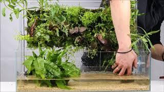 Planting a DOOA Neo Glass Terra H23 with Wabi-Kusa Wall 60 & Wabi-Kusa Wall Stand 60