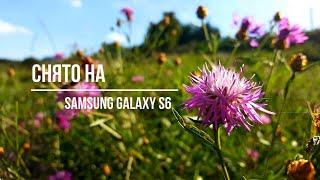 4K   МАКРО ФОТО, природа   СНЯТО на Samsung Galaxy S6   MACRO Photo Nature CAMERA Samsung Galaxy S6