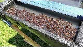 видео Средства от мух и от оводов