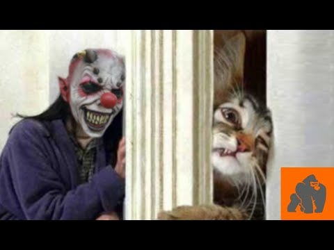 Funny Cats Scared of Masks - Part 4