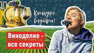 Вино. Как делают вино в Анапе. Винодельня Бердяева
